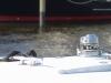2012_0223_235650-img_2100